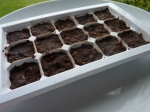 Chocolate nibbles in tray