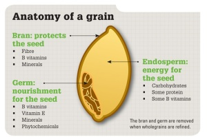 Wholegrain Anatomy