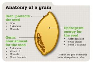 Wholegrain Anatomy